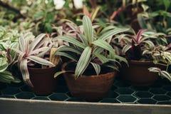 Eigengemaakte succulente installaties in de potten Royalty-vrije Stock Afbeeldingen