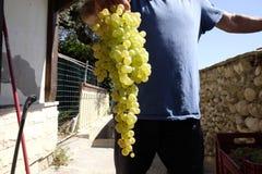 Eigengemaakte wijnproductie stock foto