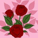 Eigenhändig zeichnendes Rosen-Muster Lizenzfreies Stockbild