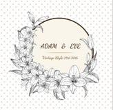 Eigenhändig zeichnender Lilienblumen-Kartenvektor Stockfotos