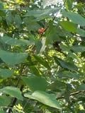 Eigenschappen van Bomen Stock Foto's