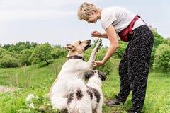 Eigentümer bildet ihren Hund aus und gibt ein Imbissfreien im Park an einem Sommertag lizenzfreies stockbild