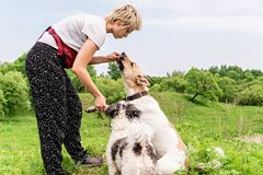 Eigentümer bildet ihren Hund aus und gibt ein Imbissfreien im Park an einem Sommertag stockbilder
