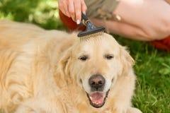 Eigentümer, der ihren erwachsenen Hund pflegt stockfoto
