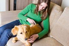 Eigentümer, der ihren Hund kämmt Lizenzfreies Stockfoto