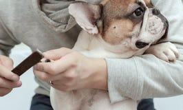 Eigentümer kümmert sich um Hund-` s Greifern Stockbild