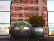 Eigentum - Pflanzer - Terrasse - Garten Stockfotografie