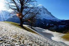 Eiger från snöig Grindenwald, Schweiz Arkivbild