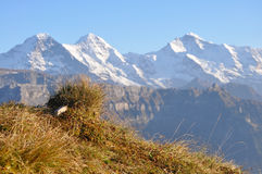 Eiger-Monch-Jungfrau Lizenzfreies Stockbild