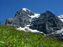 Eiger mountain in Switzerland. Panorama with Eiger (3970 m) mountain in Switzerland Alps. The Eiger is a mountain in the Swiss Alps (Bernese Oberland) with a royalty free stock image