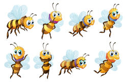 Eight bees in different positions Royalty Free Stock Photography