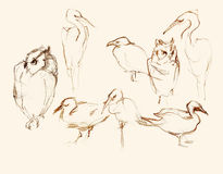 Eight birds pencil artistic sketches illustration. Pencil artistic sketches illustrations of eight birds figures: owls, herons, duck, gulls stock illustration