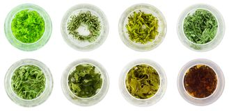 Eight bowls of green tea stock images