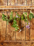 Eight bunches of different fresh culinary herbs Stock Image
