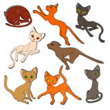 Eight colorful funny cats on a white background Royalty Free Stock Photography