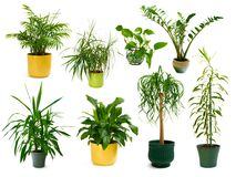 Eight different indoor plants in a set Stock Photos