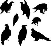 Eight eagle silhouettes Stock Images