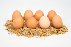 Eight eggs with husk Royalty Free Stock Image