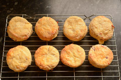 Eight English scones cooling on wire rack Royalty Free Stock Photo