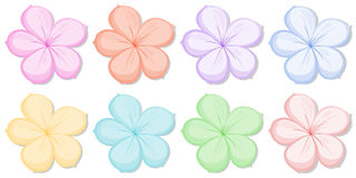 Free Eight Five-petal Flowers In Different Colors Stock Images - 37891624