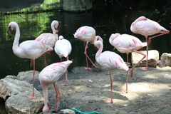 The Eight Flamingos stock images
