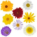 Eight garden flowers Stock Photography