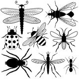 Eight Insect Silhouettes. Including a dragonfly, bee, fly, ladybug, spider, ant and mosquito Stock Image