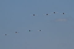 Eight Japanese Fighters. Approaching Run Stock Photo