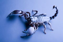 Eight-legged scorpion Stock Image