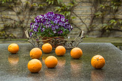 Eight oranges and lot of violets Royalty Free Stock Photo