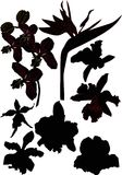 Eight orchid silhouettes Stock Images