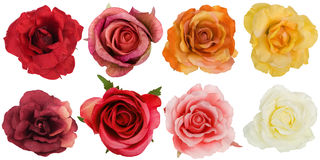 Eight roses seen from above Royalty Free Stock Photos