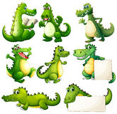 Eight scary crocodiles. Illustration of the eight scary crocodiles on a white background Royalty Free Stock Photo