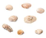 Eight seashells Royalty Free Stock Photography