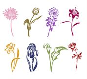 Eight silhouettes of flowers. Stock Photo