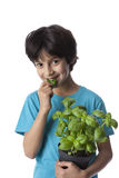 Eight year old boy eats basil leaves Royalty Free Stock Images
