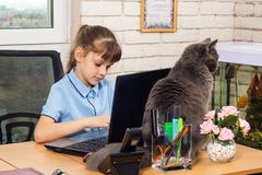 Eight-year-old girl at the office table, a cat sits on the table royalty free stock photos