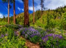 Eightmile-Spur, Washington State Stockfoto