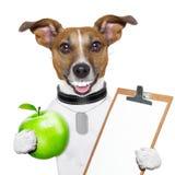 Eignung und gesunder Hund stockbild