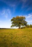 Eik (de herfst) Royalty-vrije Stock Afbeeldingen