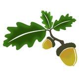 Eik, leafes en eikel Royalty-vrije Stock Foto