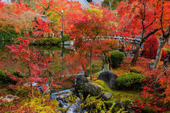 Eikan-do garden with red fall colors, Kyoto Royalty Free Stock Images