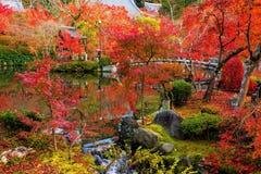 Eikando garden in autumn, Kyoto. Eikando garden and pond with Autumn foliage colors at peak in late November, Kyoto, Japan Royalty Free Stock Photography