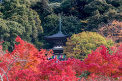 Eikando Temple, Colorful Autumn Leaf Season Royalty Free Stock Image