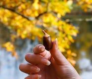 Eikel in een hand van de jonge vrouw Stock Foto