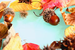 Eikel, noten en bladeren Royalty-vrije Stock Afbeeldingen