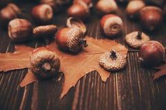 Eikels en droge bladeren op het hout De achtergrond van de herfst Rode en oranje het bladclose-up van de kleurenKlimop Selectieve Stock Afbeeldingen