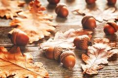 Eikels met bladeren Stock Fotografie