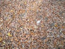 Eiken blad die bij herfstscène aansluiten zich royalty-vrije stock foto