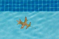 Eiken Blad die in Pool drijven Stock Afbeelding